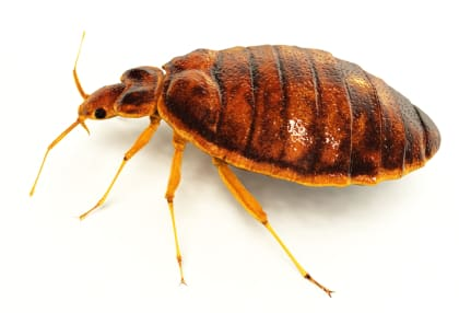 Are You Under A Bed Bug Attack?
