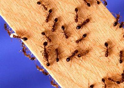 ants05
