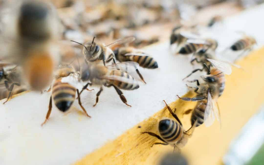 Different Types of Bees in the World