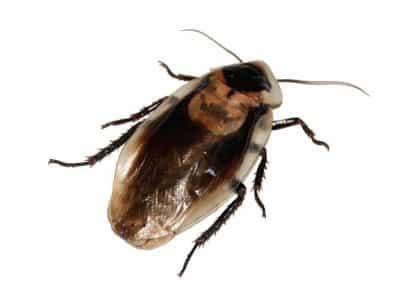 cockroach_06