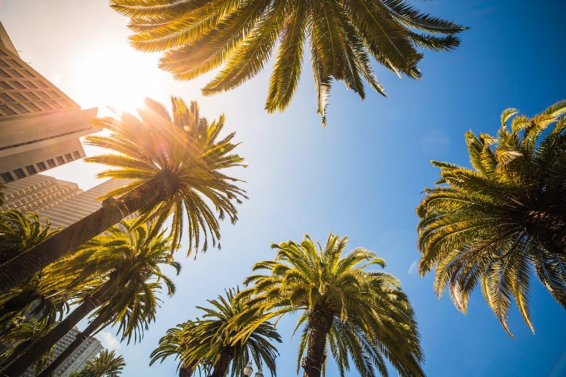 organic pest control palm beach county, organic pest control palm beach gardens